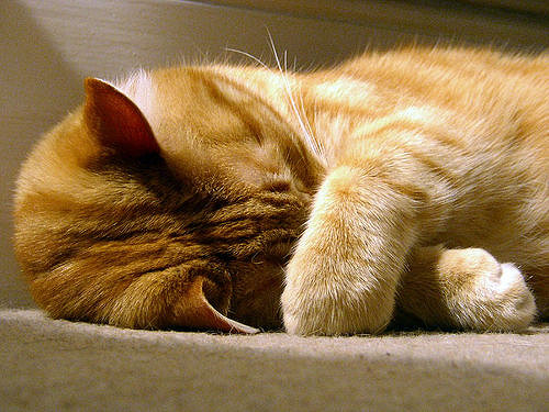cat, asleep, awake, gary davis, christianity, thinking
